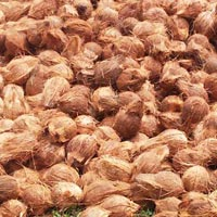 Semi Husked Coconuts For Export
