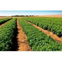 Horticulture Farming