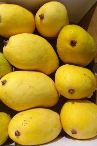 Chaunsa Mangoes