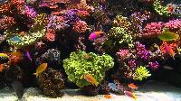 Marine Tropical Aquarium