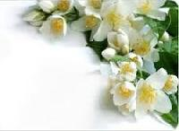 Jasmine Oil(for Soap Candle,perfumes)