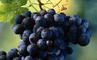 Grapes -01