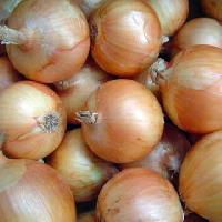 Onion -01