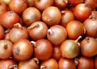 Onion -02