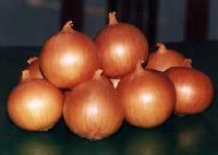 Onion -03
