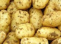 Potato -02