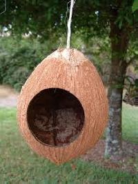 Coconut Shell Bird House