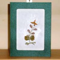 Greeting Cards Gc-01