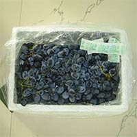 Indian Black Grapes