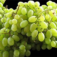 Indian Green Grapes