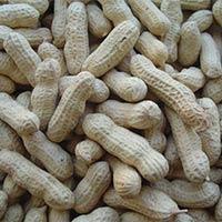 Java Peanut In Shell (24-28)
