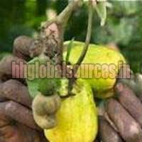 African Raw Cashew Nuts