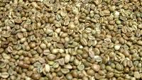 Robusta Green Coffee