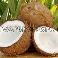 Indian coconut