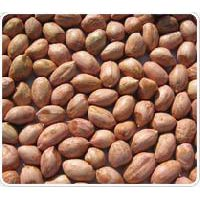 Groundnut Kernels - Java