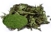 Stevia Dry Leaves And Green Powder