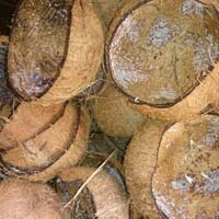 Indian Coconut Shell