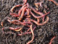 Farming Earthworms