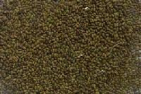 Sesbania Seed