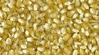 Yellow Sweet Corn Seed