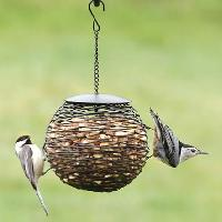 Peanut Bird Feed