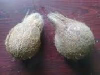 Indian Fresh Pollachi Coconut