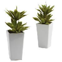 Decorative Plants