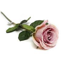 Silk Rose Flower