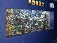 Live Marine Ornamental Fish
