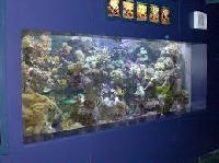 Live Marine Ornamental Fish