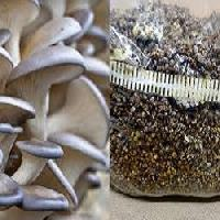 how to make mushroom seeds in tamil