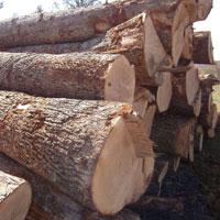 Hardwood, Lumber, Logs