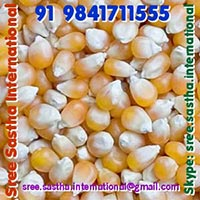 Yellow Maize, Corn For Animal Feed