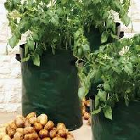 Planter Grow Bags