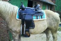 Flexible Saddle 10010031