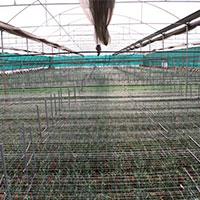 Carnation Farm