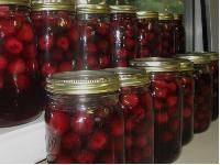 Canned Cherry