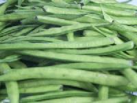 Fresh Guar Gum Beans