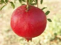 Ashtagandha Pomegranate