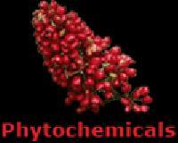 ebook Photoelectrochemical Hydrogen Production