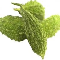Karela Extracts