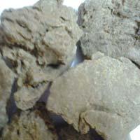 Moringa Seed Oil Cake Exporters India