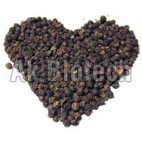Black Pepper Seeds - Manufacturer and Wholesale Suppliers,  Tamil Nadu - AK Biotech