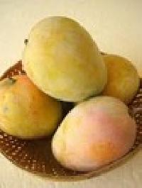 Ripe Mango
