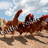 Broiler Chicken Finisher Feed