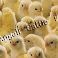 Broiler Chicken Pre Starter Feed
