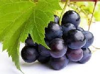 Seedless Concord Grapes