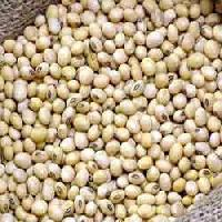 Soya Bean Seeds