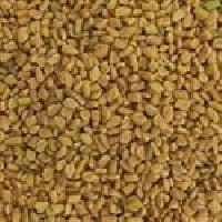Fenugreek Seed, Dana Methi, Medicinal Herbs