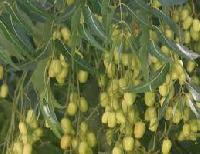 Neem Seeds